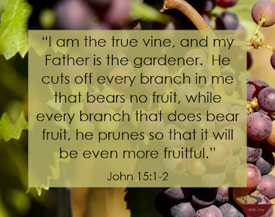 The verse with grape vines as the background