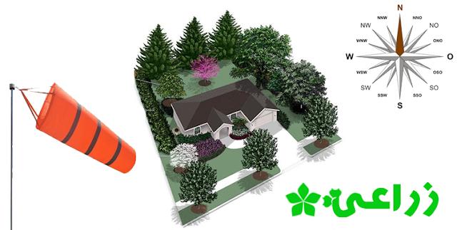 أشجار مثمرة يمكن زراعتها فى منزلك - تعرف عليها مع الأجندة الزراعية