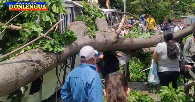 Un árbol aplastó a todos los ocupantes de un autobús en la Avenida México