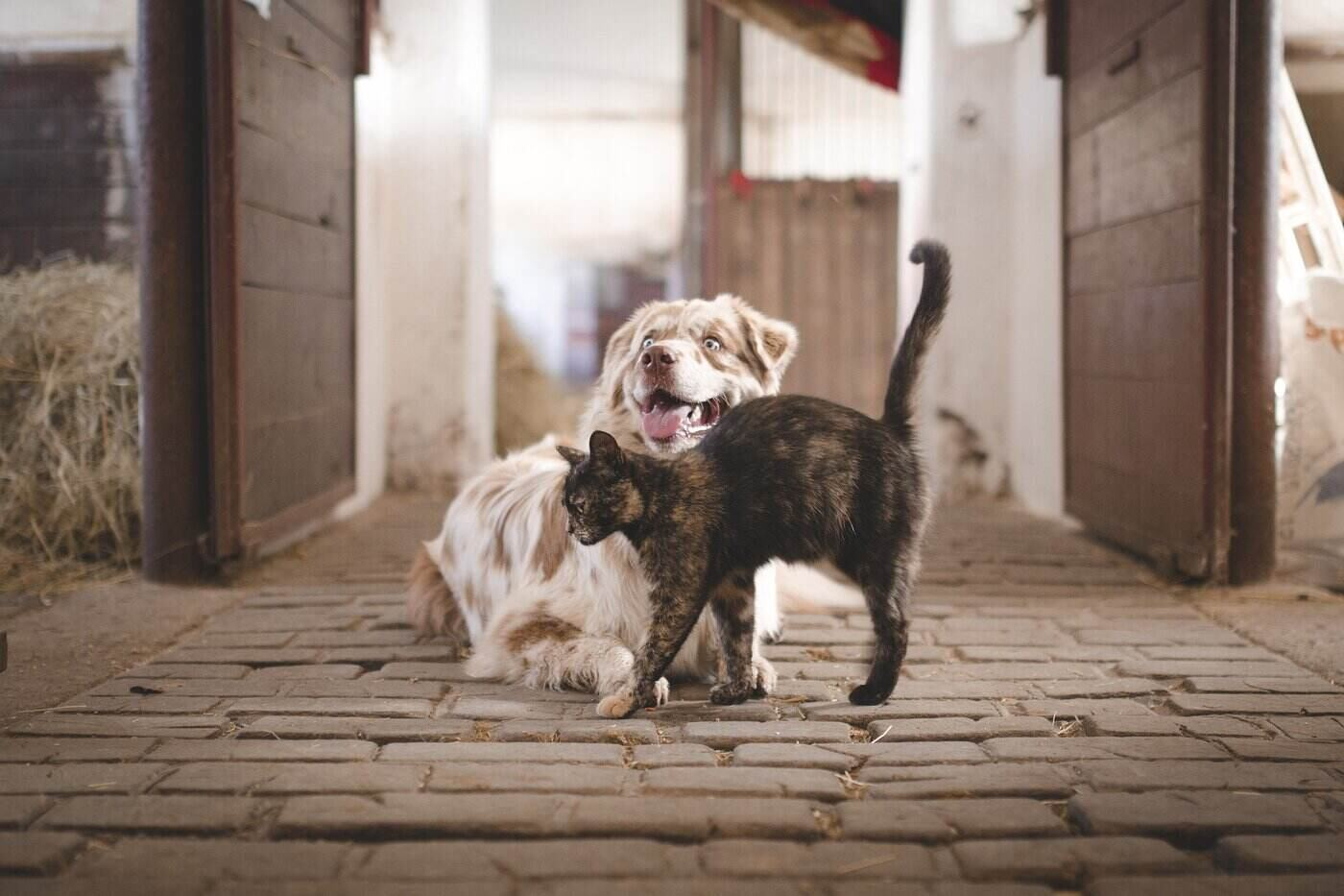 dog and cat in barn - ideal dog breeds to adopt as helping hands on a farm
