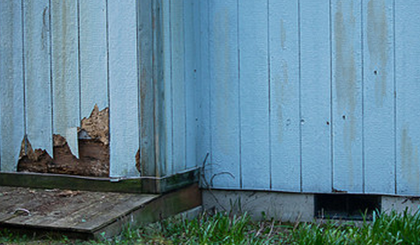 Prevent Termites From Spreading In Your Home