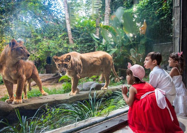 Yuk, Kunjungi Bali Zoo Experience Bersama Traveloka Xperience!