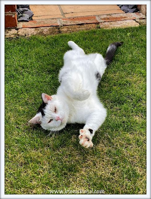 Smooch's Big Sunday Stretch ©BionicBasil® The Sunday Selfies