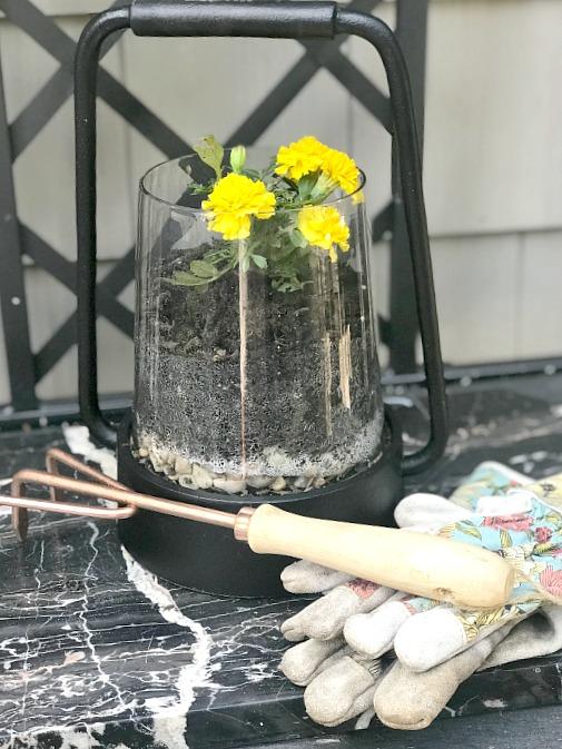 Repurposed glass lantern for flower planting.