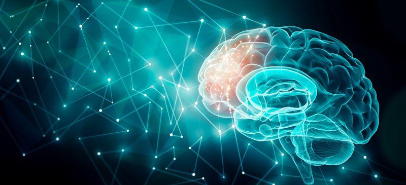A Redução na Atividade Cerebral Pode Aumentar a Longevidade?
