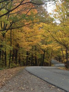 Winding through Brown County State Park. Image Credit Jamie Ward.
