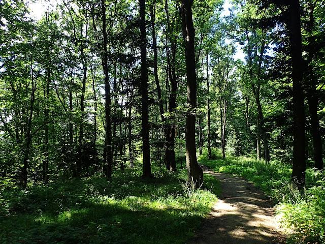 Słoneczny górny odcinek szlaku Jabłonica - Liwocz