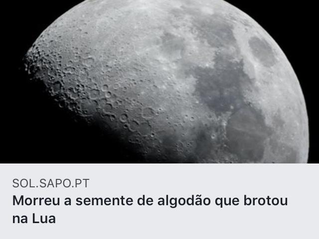 https://sol.sapo.pt/artigo/642563/morreu-a-semente-de-algodao-que-brotou-na-lua?fbclid=IwAR0Yay3arSOGo3scq14SQ-1upMiQWM