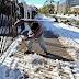 Χιλή: Σπάνια χιονόπτωση προκαλεί χάος (video)