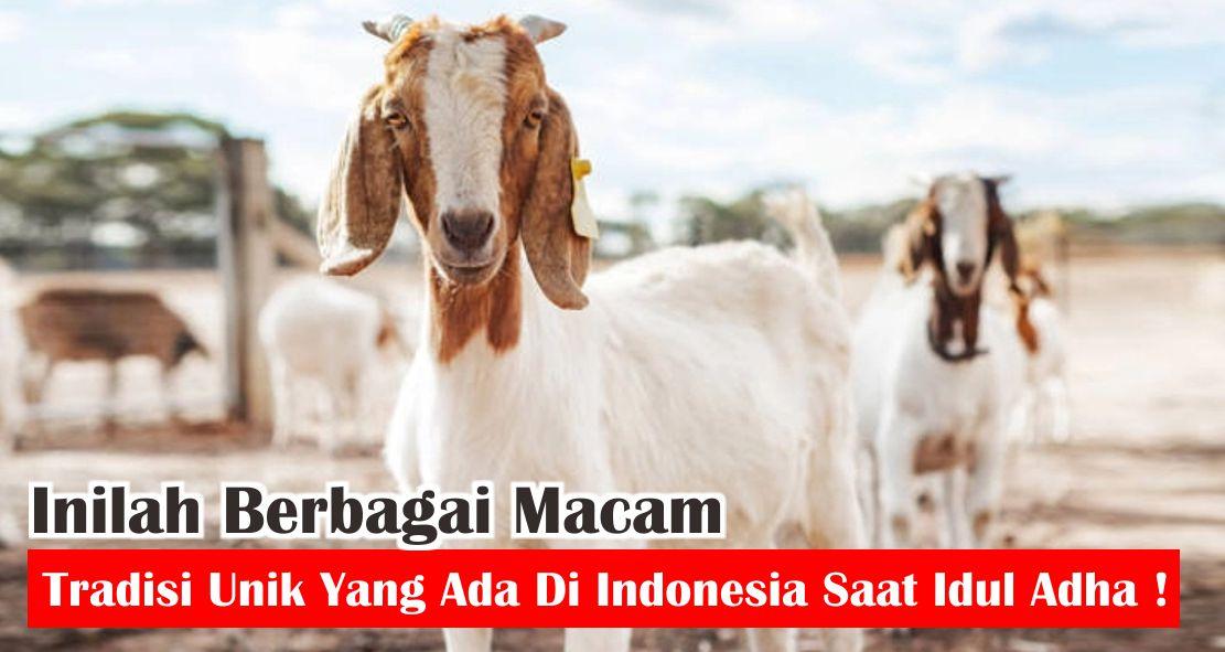 Inilah Berbagai Macam Tradisi Unik Yang Ada Di Indonesia Saat Idul Adha !