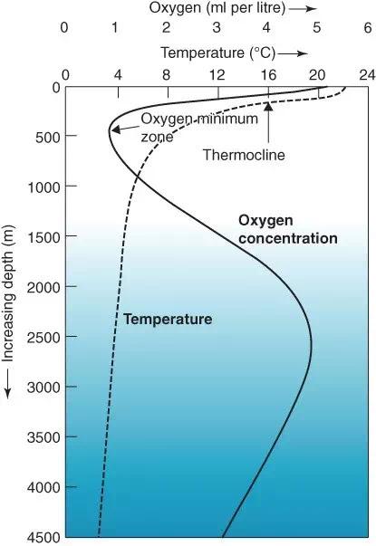 3. Profil khas laut tropis yang menunjukkan lapisan termoklin dan zona minimum oksigen.