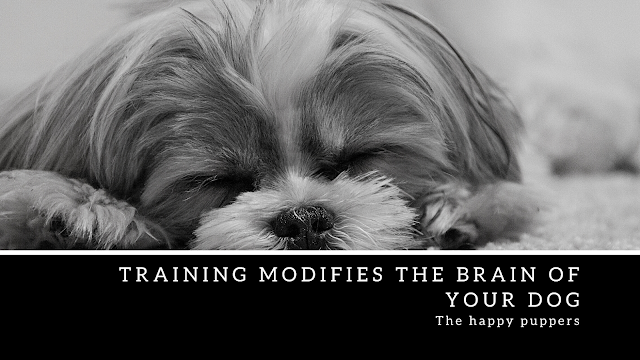 How you train your dog can cause modifications to their neural networks