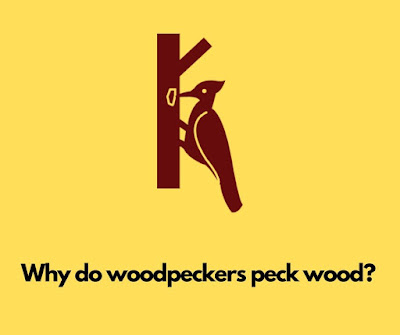 Why do woodpeckers peck wood?