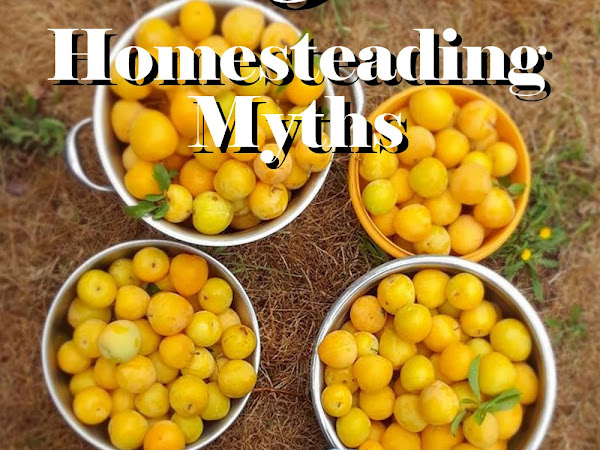 5 Homesteading Myths