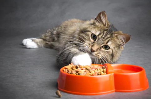 Purina Cat Food Review
