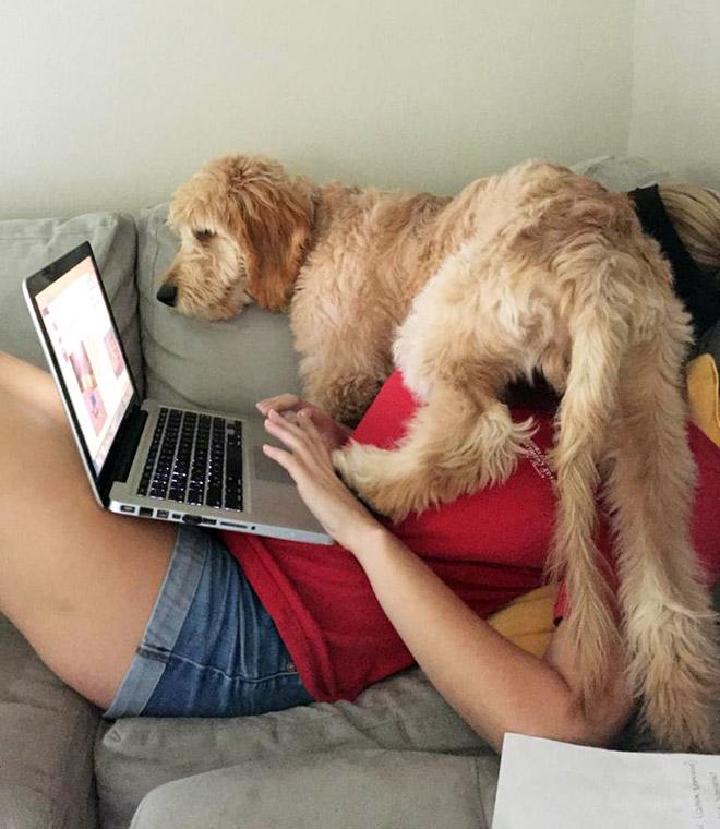 Las personas están compartiendo cómo es tener 'home office' con mascotas