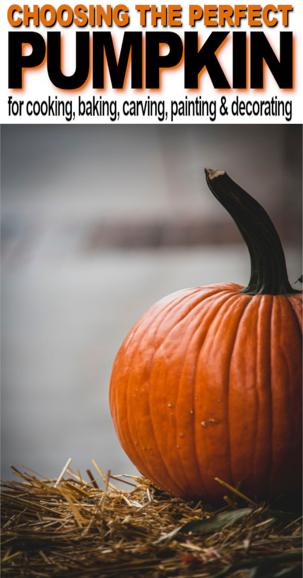 how to pick the perfect pumpkin tips and tricks
