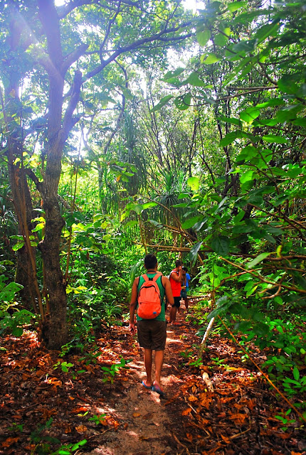exploring the mini forest in Mantigue Island