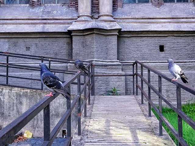 Dos palomas sobre rejas de una pasarela dan la espalda a otra posada sobre otra reja trasera