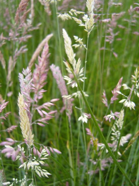 Wildflower meadow: Barn Owl nesting boxes, sites & habitat.