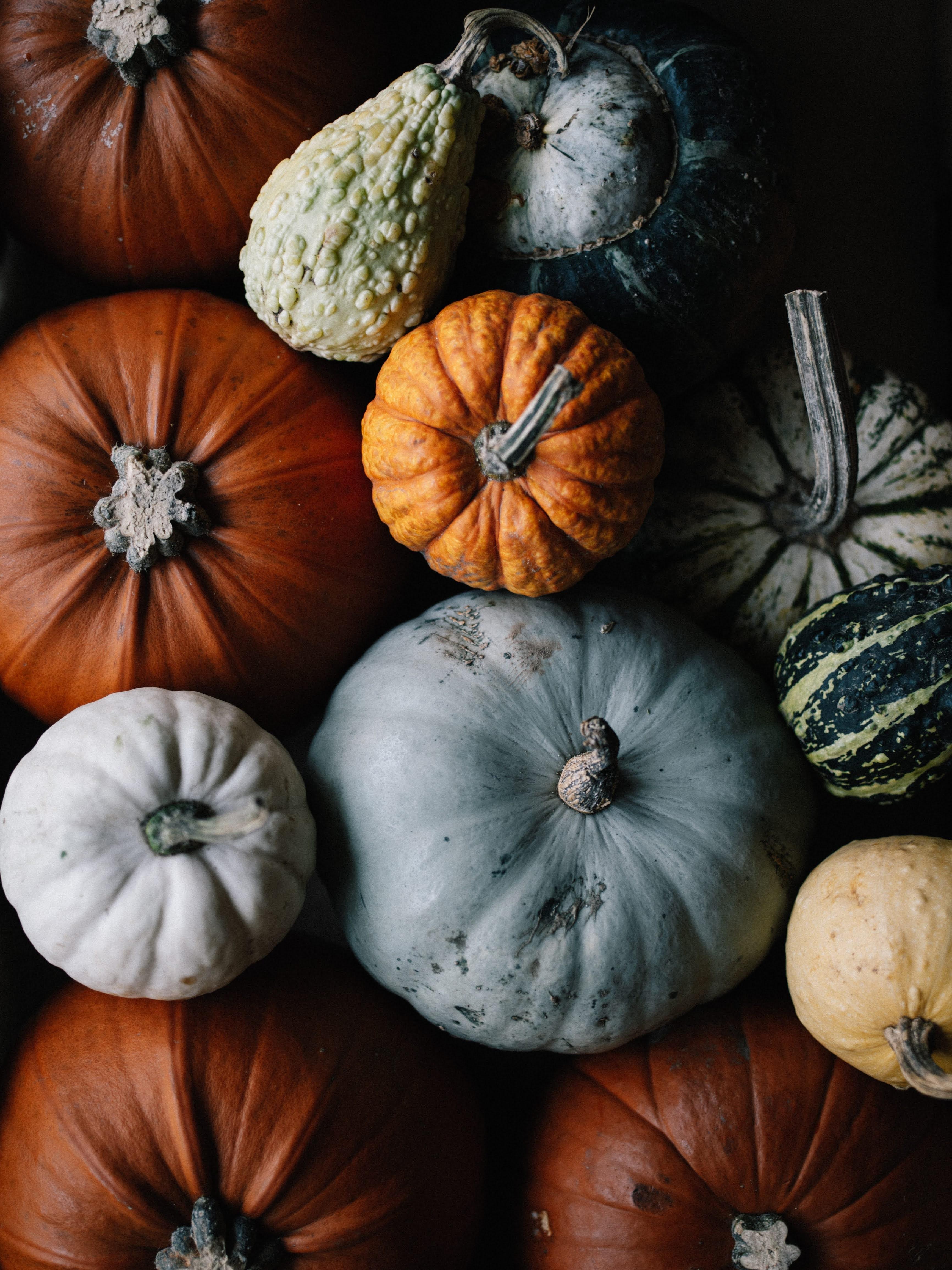 Assortment of Fall Pumpkins and Gourds | Photo by Annie Spratt via Unsplash