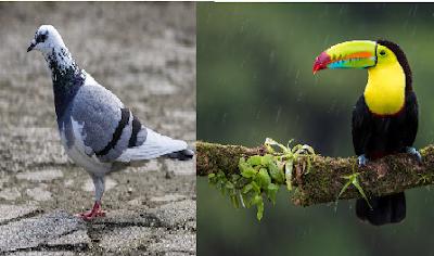 9 Jenis Burung Paling Langka yang Berharga Fantastis