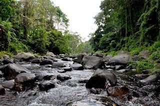 Tempat Wisata Hutan Lindung Sesaot Pemandangan