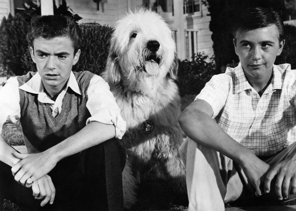 Image result for shaggy dog 1959
