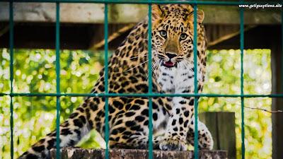 Zoo Captions,Instagram Zoo Captions,Zoo Captions For Instagram