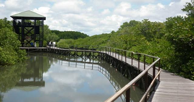 Ekowisata Mangrove EduPark