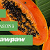 Good Reasons To Eat Pawpaw