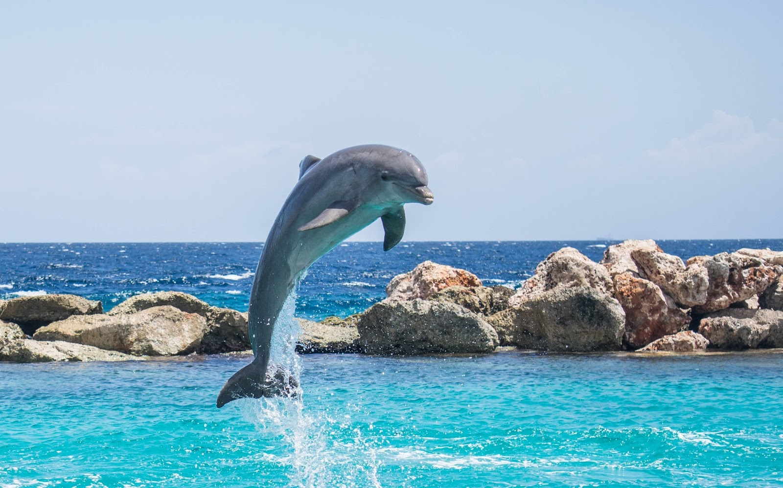 A dolphin jumping out of water.