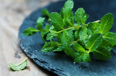 Essential nutrients behind the myriad uses of Mint leaves