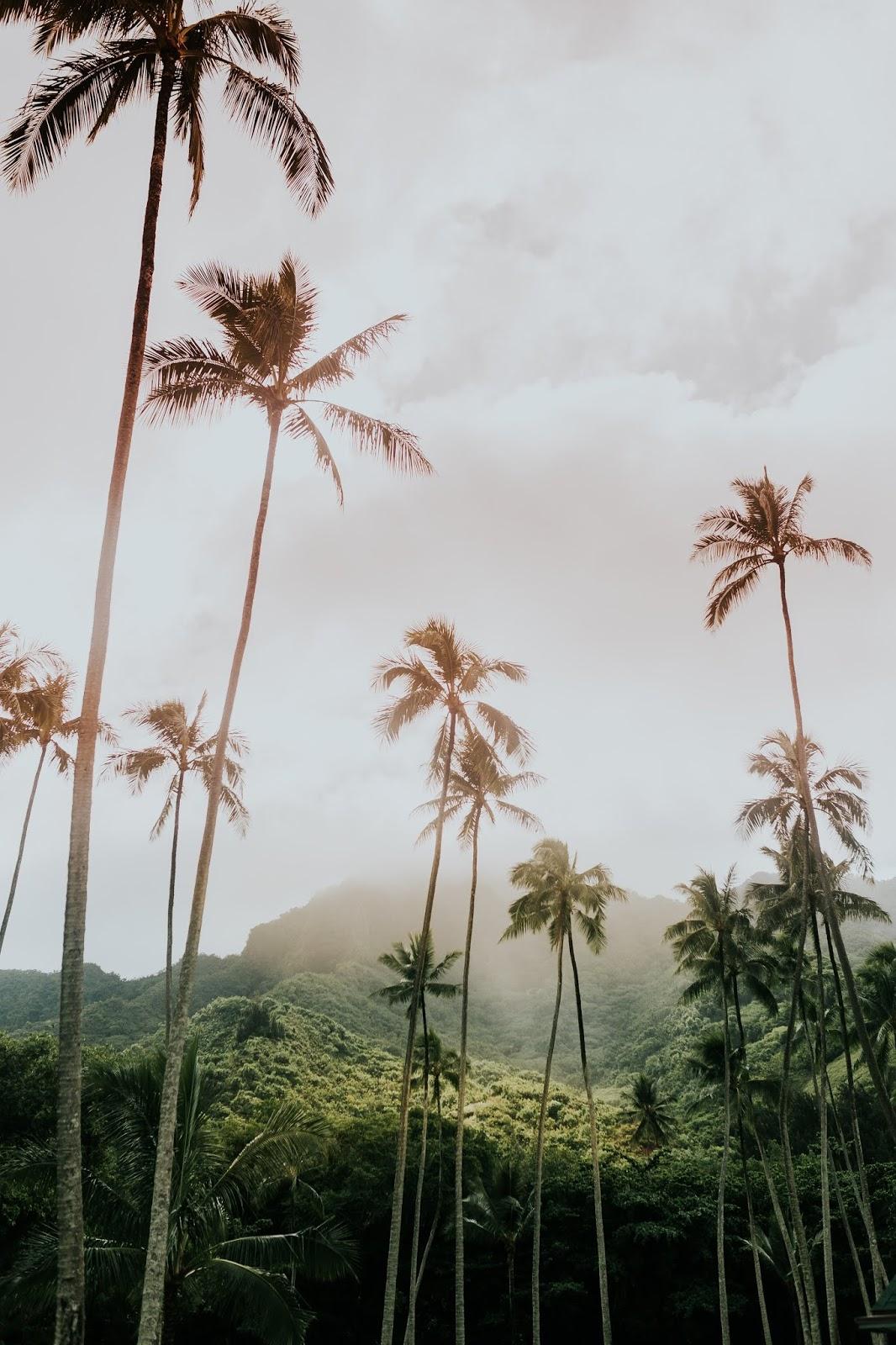 73 Natural Hawaii background HD Wallpapers