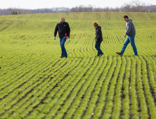 nutrient management research northwest Minnesota wheat corn