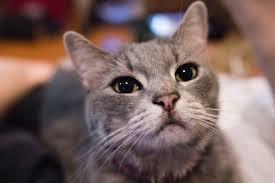 Cats, Cats Cute,