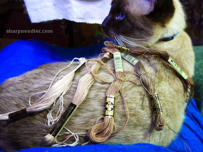 Royal School of Needlework Pet Portrait Class: Choosing thread colours using Siamese cat as source for future embroidery project