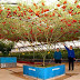 """This """"Octopus Tomato Trees"""" Can Yield up to 32,000 Tomatoes per Harvest"""