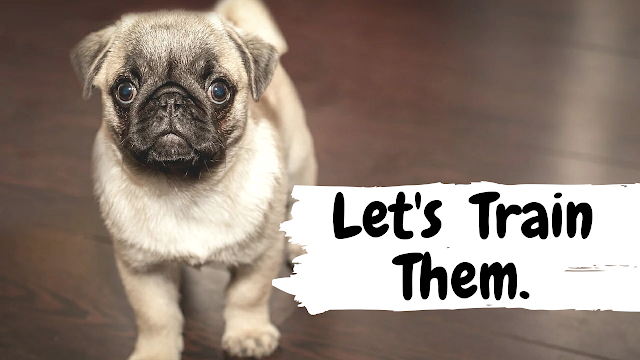 Train Your Dog How to Behave Properly