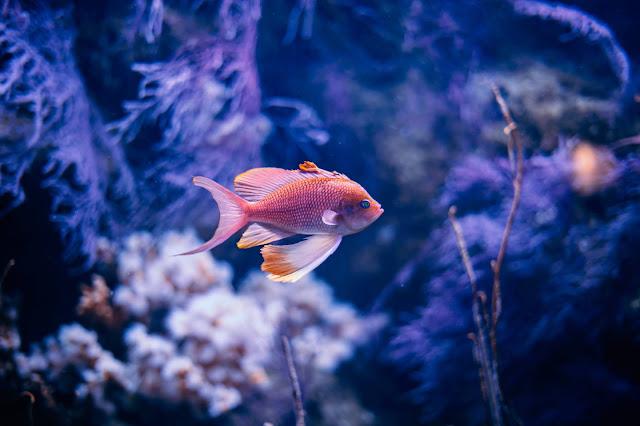 মাছ; শ্লোক - ৪৪২