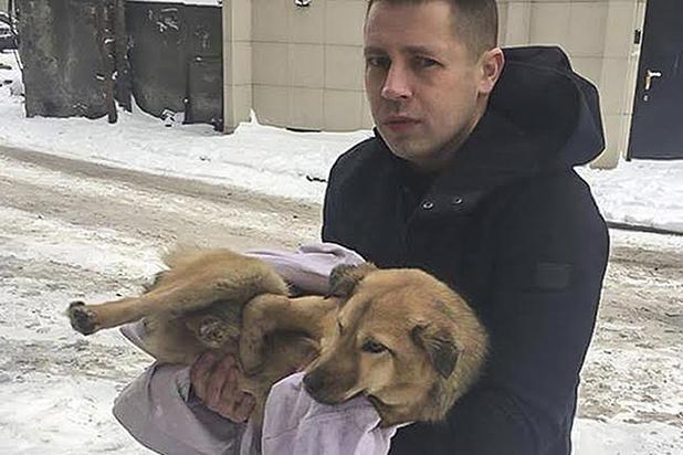 Война животных: как на Донбассе братьев меньших спасали