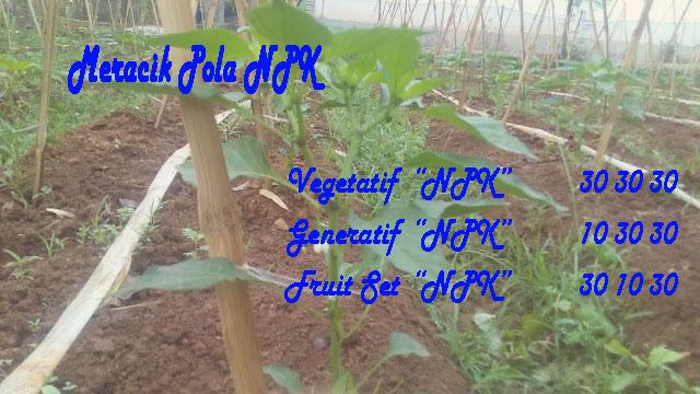 Mengenal Pupuk Majemuk (Nyontek Pupuk Mahal Growmore) Pada Fase Pertumbuhan Tanaman