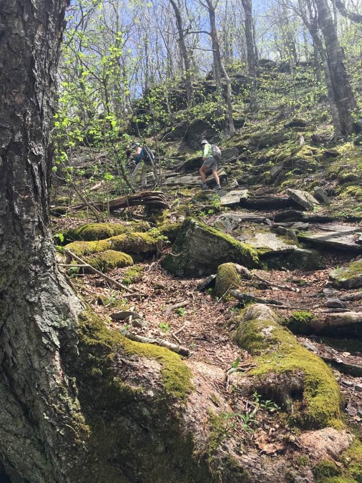 Fall Creek Hiker Balsam Mountain In Big Indian Wilderness