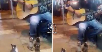 الجميع لم يعيروا إنتباه لصاحب الجيتار ولكن أنظر فقط ما فعلوه الأربع قطط !! .. روووعة !!