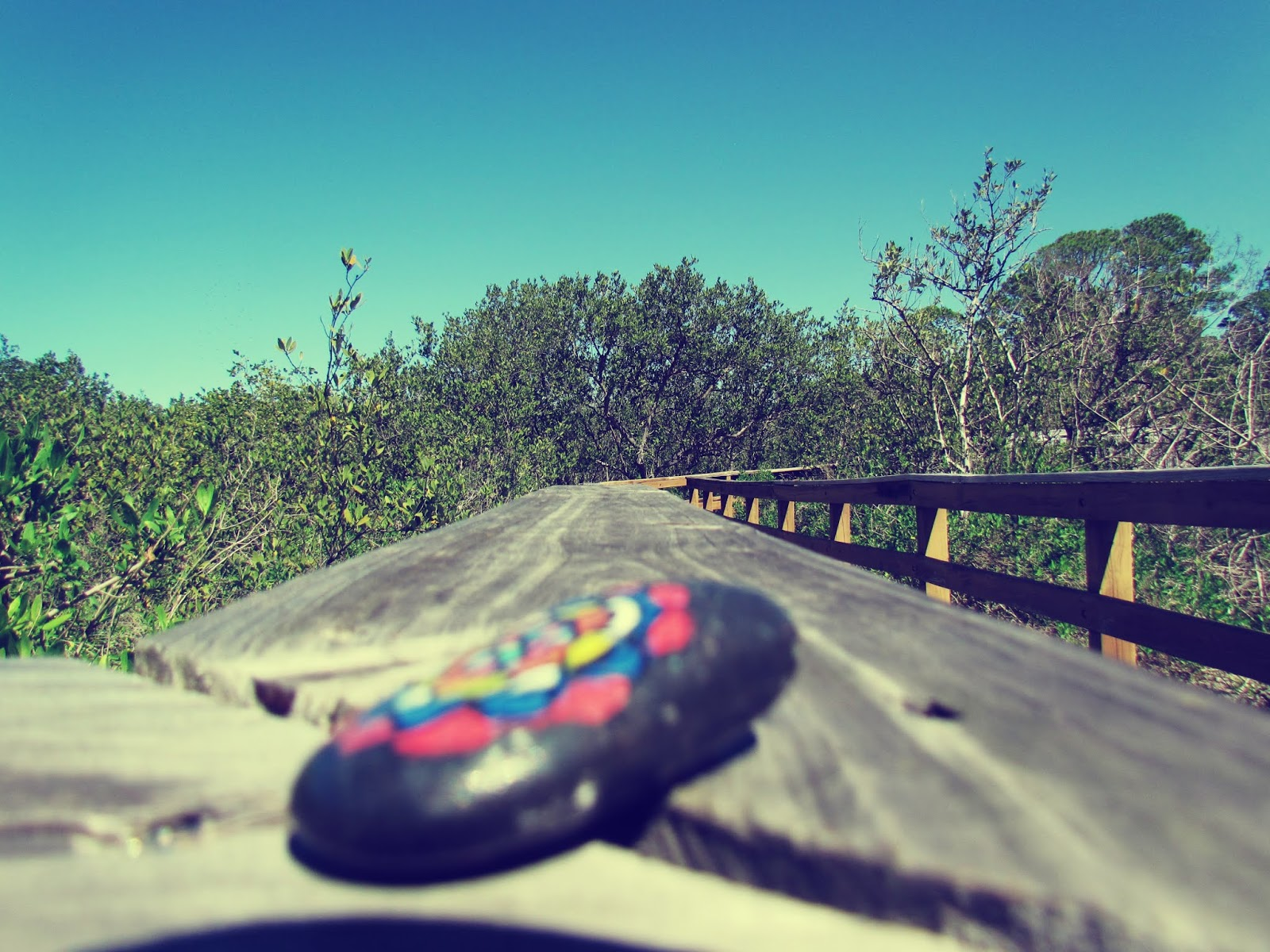 Florida Wildlife + Black Painted River Rock on a Bridge in Nature