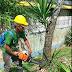 Mais moradores se unem à Prefeitura para uma Itabuna mais verde e mais limpa