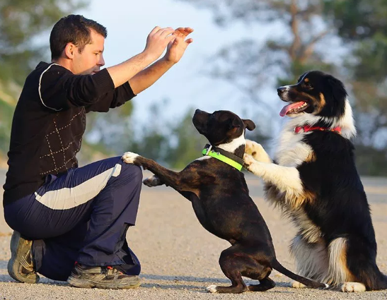 3 easy to teach dog tricks
