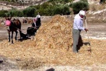 """محمد السليلة - """"النادر"""" عند بني يازغة"""