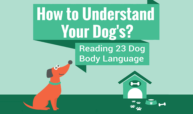 How to Understand Your Dogs?