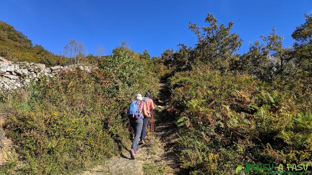 Sendero entre fincas hacia el Pico Formoso